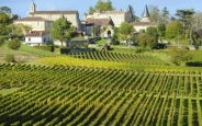 vineyard-saint-emilion-bordeaux-and-the-wine-country-france_main